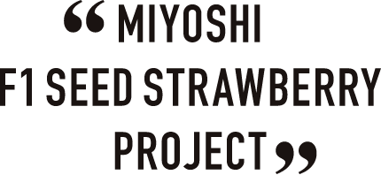MIYOSHI F1 SEED STRAWBERRY PROJECT