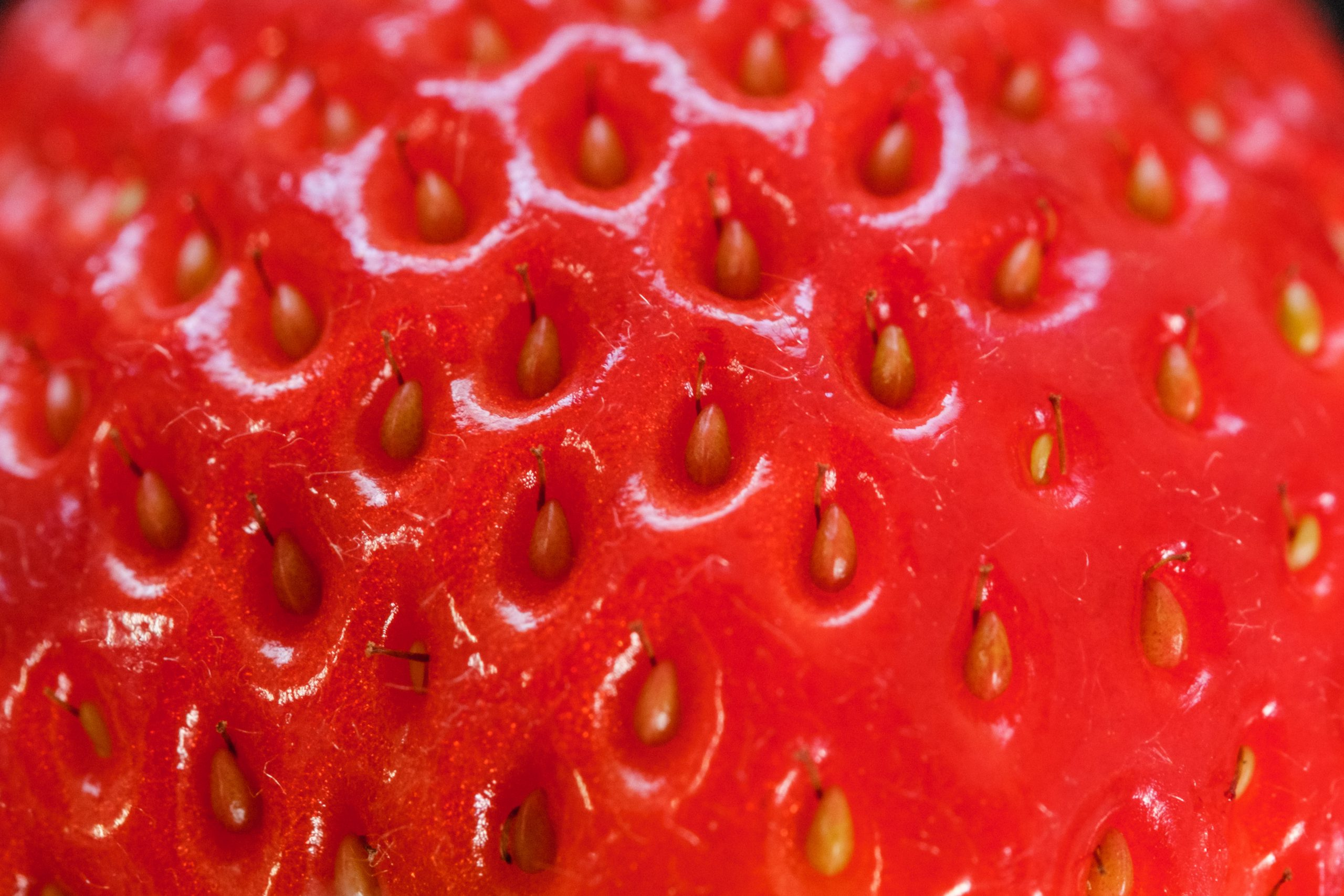 Regarding to MIYOSHI F1 SEED STRAWBERRY Berry Pop supply